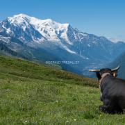 Alpage de Balme-AL702014