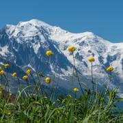 Des Trolls devant le Mont-Blanc-AL702037