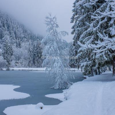 Lac des Gaillands-dscf0730