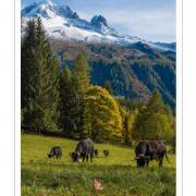 Vaches au Planet-nik4758