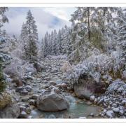 Première neige-nik4920