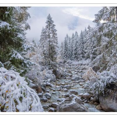 Première neige-nik4921