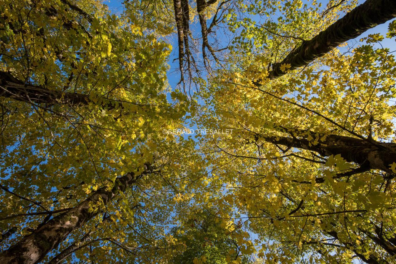 Arbres en automne-nik5284